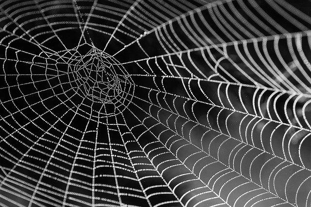 פחד מעכבישים