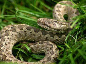פחד מנחשים